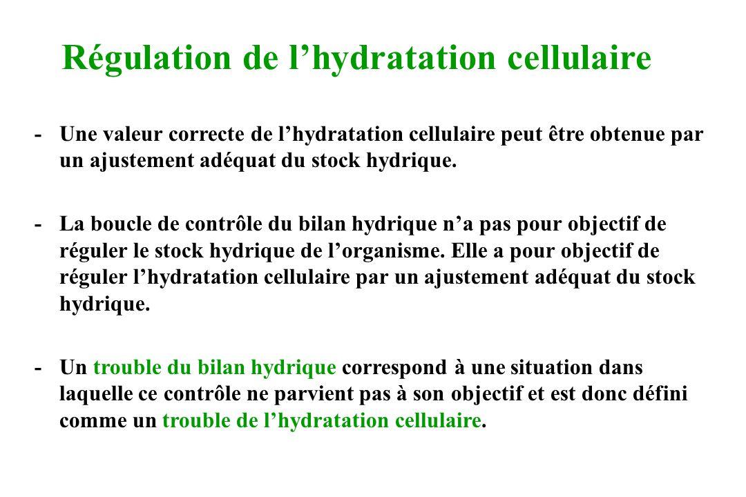 Régulation de lhydratation cellulaire -Une valeur correcte de lhydratation cellulaire peut être obtenue par un ajustement adéquat du stock hydrique. -