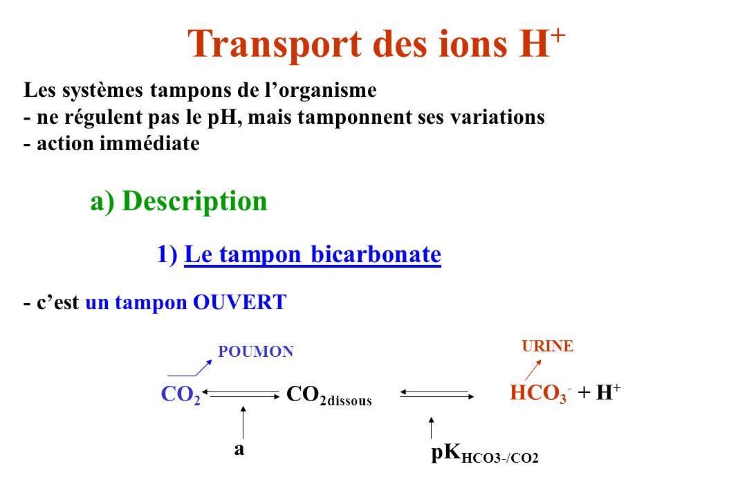 Les systèmes tampons de lorganisme - ne régulent pas le pH, mais tamponnent ses variations - action immédiate a) Description 1) Le tampon bicarbonate