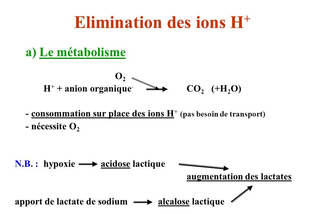 a) Le métabolisme O 2 H + + anion organique - CO 2 (+H 2 O) - consommation sur place des ions H + (pas besoin de transport) - nécessite O 2 N.B. :hypo