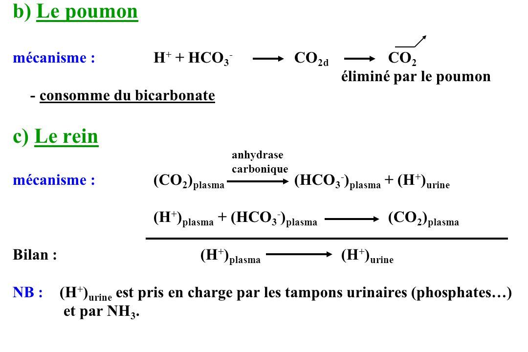 b) Le poumon mécanisme :H + + HCO 3 - CO 2d CO 2 éliminé par le poumon - consomme du bicarbonate c) Le rein mécanisme : (CO 2 ) plasma (HCO 3 - ) plas