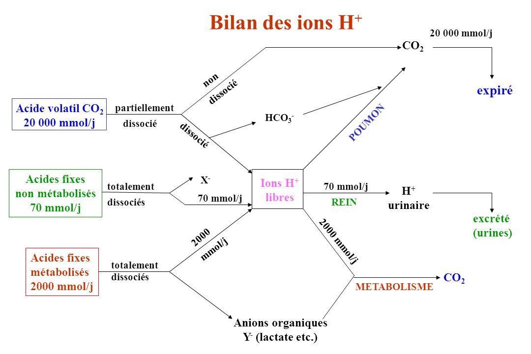 Bilan des ions H + Afin d éviter une production ou une consommation continuelle de bicarbonate empêchant la stabilité de [HCO 3 - ] : - le poumon doit éliminer une quantité d ions H + égale à celle provenant de la dissociation de CO 2dissous.