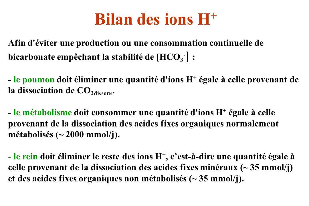 Bilan des ions H + Afin d'éviter une production ou une consommation continuelle de bicarbonate empêchant la stabilité de [HCO 3 - ] : - le poumon doit