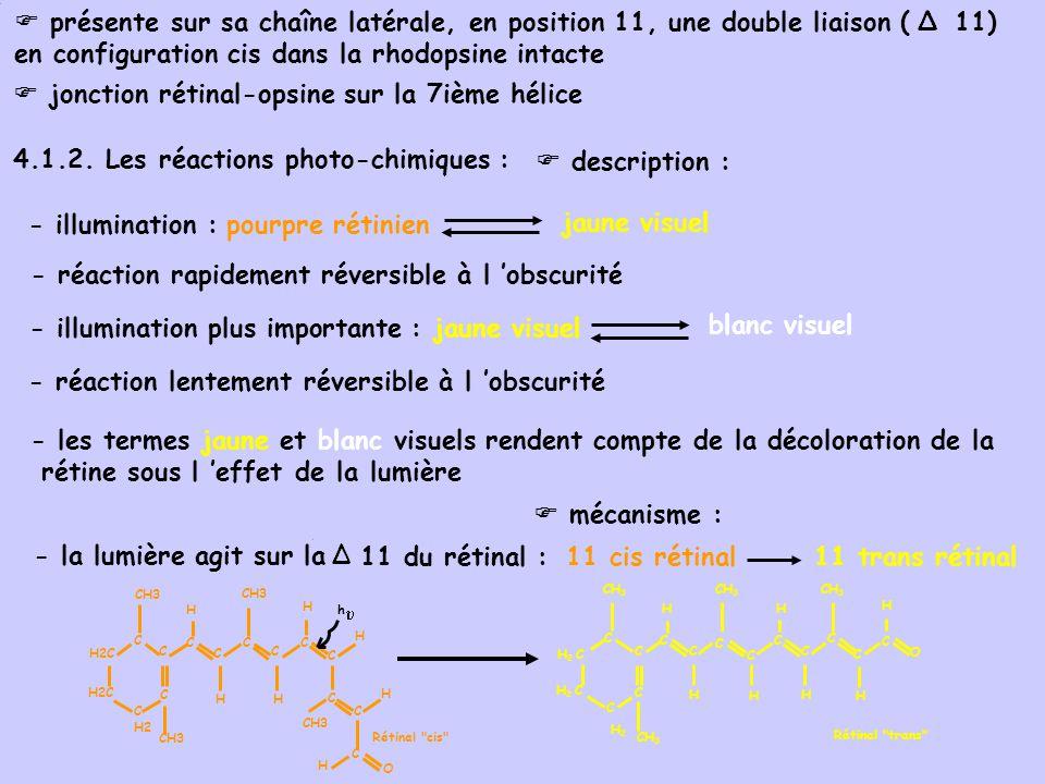 présente sur sa chaîne latérale, en position 11, une double liaison ( 11) en configuration cis dans la rhodopsine intacte jonction rétinal-opsine sur