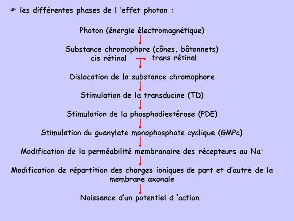 Substance chromophore (cônes, bâtonnets) cis rétinal Modification de répartition des charges ioniques de part et dautre de la membrane axonale Naissance dun potentiel d action Modification de la perméabilité membranaire des récepteurs au Na + Stimulation du guanylate monophosphate cyclique (GMPc) Stimulation de la phosphodiestérase (PDE) Dislocation de la substance chromophore Stimulation de la transducine (TD) Photon (énergie électromagnétique) trans rétinal les différentes phases de l effet photon :