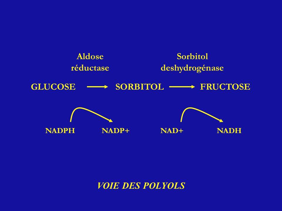 GLUCOSESORBITOLFRUCTOSE NADPHNADP+NAD+NADH Aldose réductase Sorbitol deshydrogénase VOIE DES POLYOLS