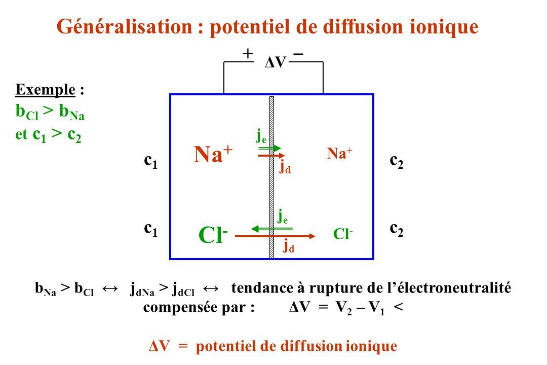 ΔVΔV Na + + _ jdjd Cl - Na + b Na > b Cl j dNa > j dCl tendance à rupture de lélectroneutralité compensée par :ΔV = V 2 – V 1 < ΔV = potentiel de diff