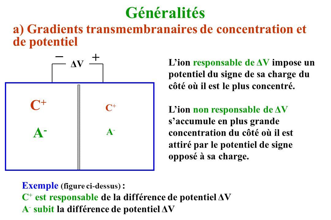 Généralités a) Gradients transmembranaires de concentration et de potentiel ΔVΔV _ + C+C+ C+C+ A-A- A-A- Lion responsable de ΔV impose un potentiel du