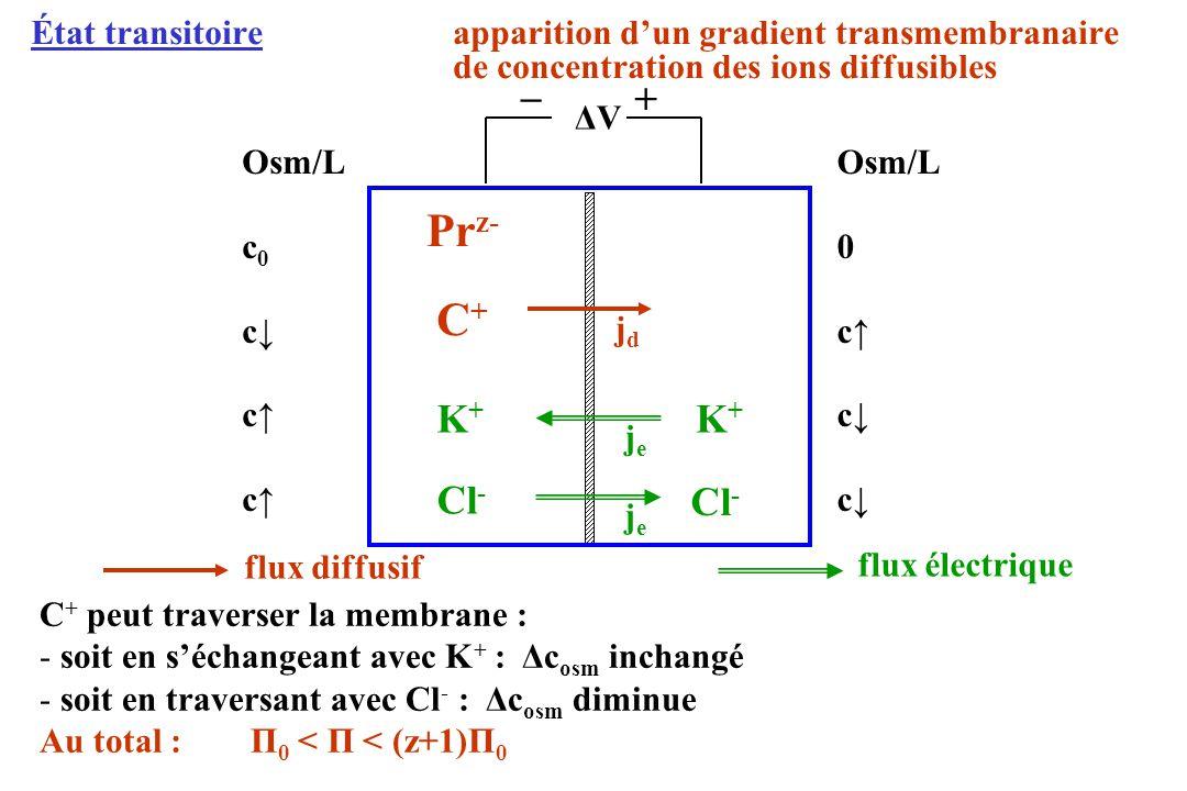 État transitoireapparition dun gradient transmembranaire de concentration des ions diffusibles ΔVΔV Pr z- Osm/L c 0 c Osm/L 0 c C+C+ + _ jdjd K+K+ Cl