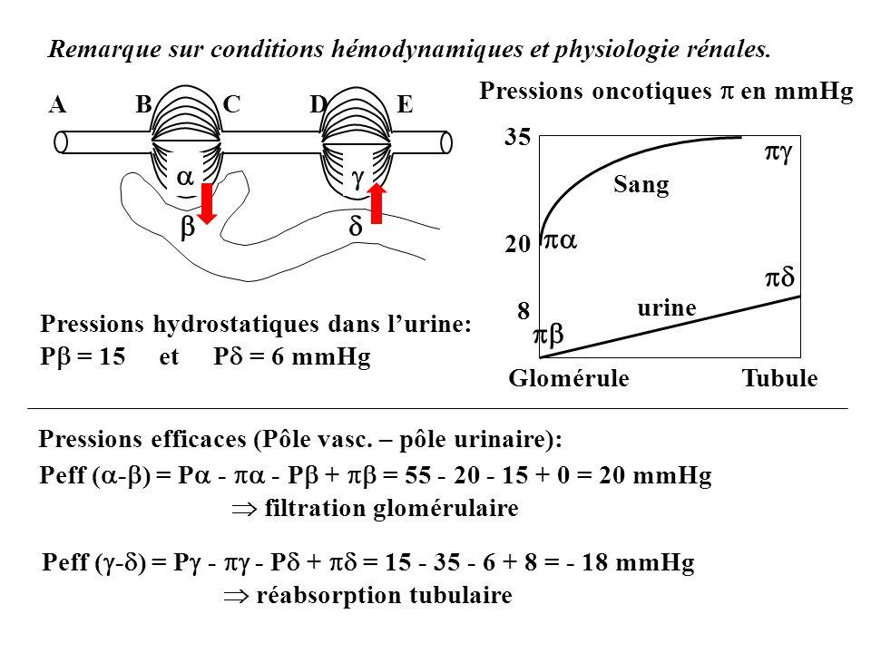 Remarque sur conditions hémodynamiques et physiologie rénales. ABCDEABCDE Pressions hydrostatiques dans lurine: P = 15 et P = 6 mmHg Pressions efficac