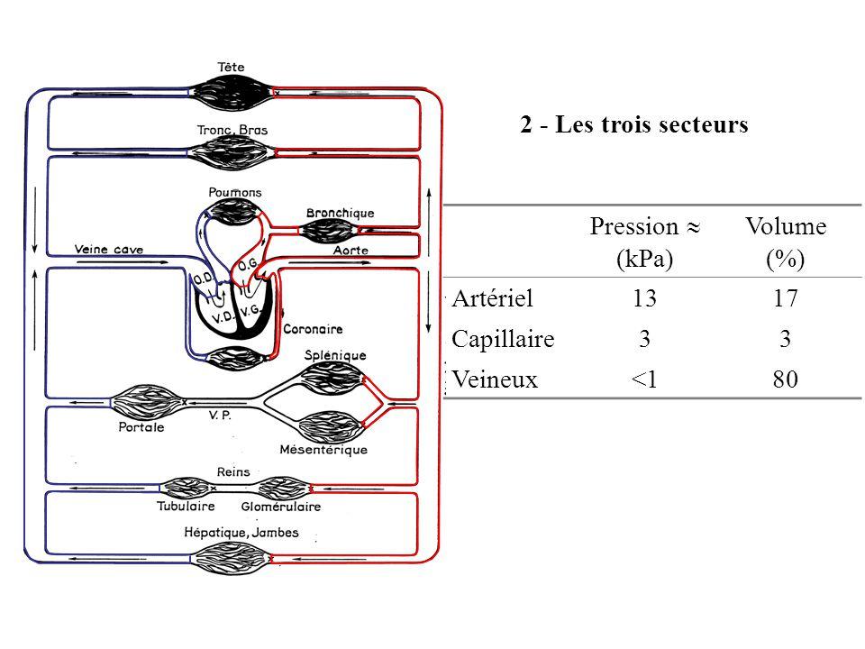 2 - Les trois secteurs Pression (kPa) Volume (%) Artériel1317 Capillaire33 Veineux<180