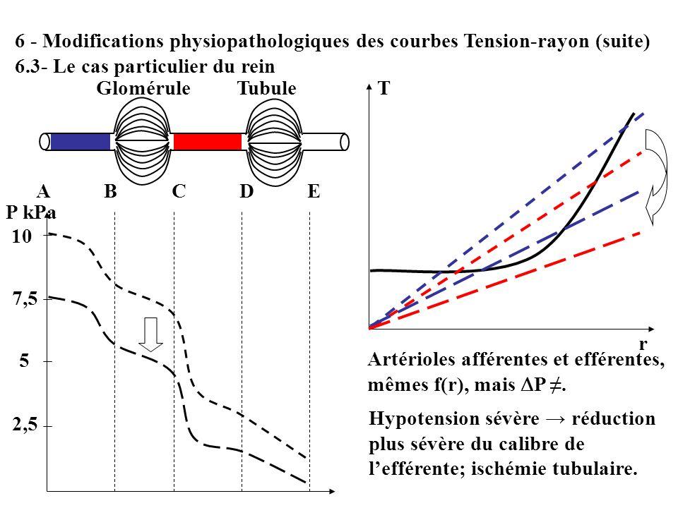 6 - Modifications physiopathologiques des courbes Tension-rayon (suite) 6.3- Le cas particulier du rein 10 7,5 5 2,5 P kPa ABCDEABCDE T r Artérioles a