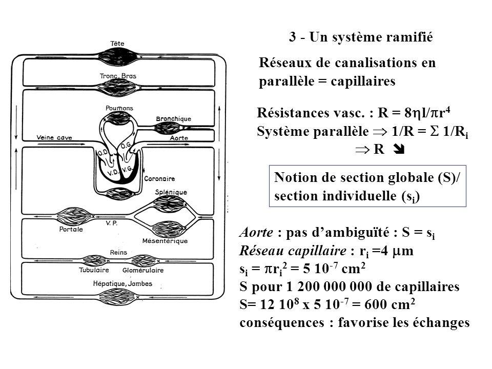 3 - Un système ramifié Réseaux de canalisations en parallèle = capillaires Résistances vasc. : R = 8 l/ r 4 Système parallèle 1/R = 1/R i R Notion de