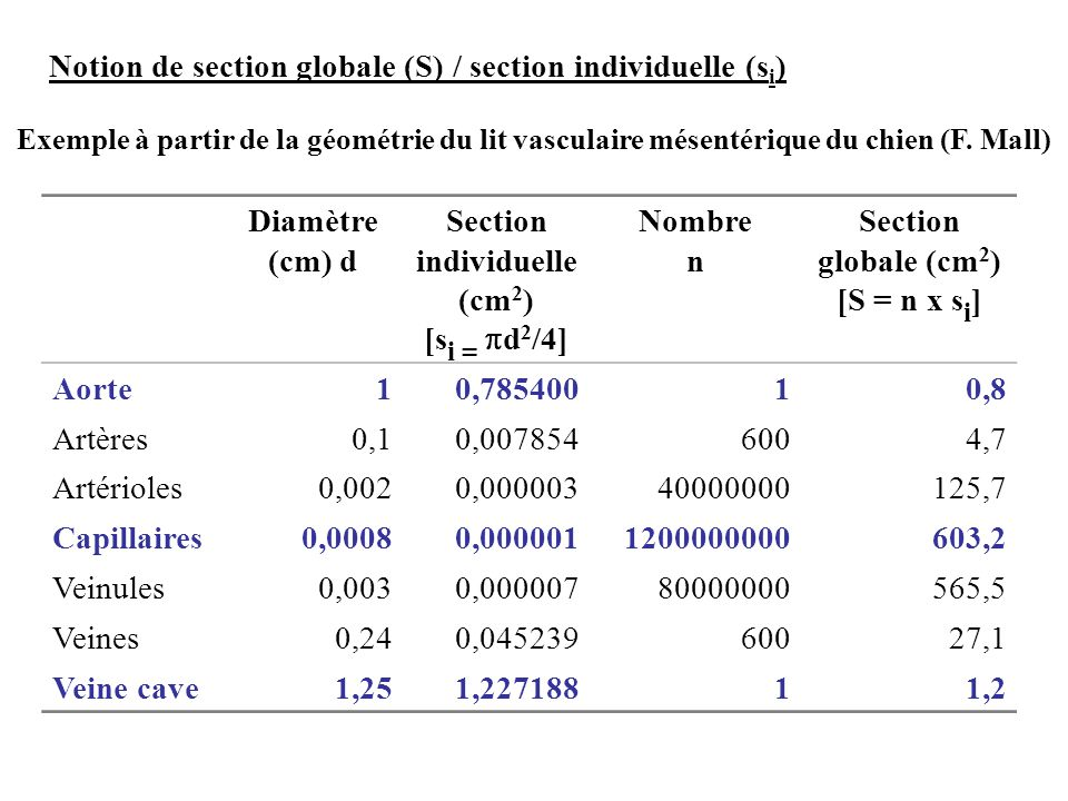 Notion de section globale (S) / section individuelle (s i ) Exemple à partir de la géométrie du lit vasculaire mésentérique du chien (F. Mall) Diamètr