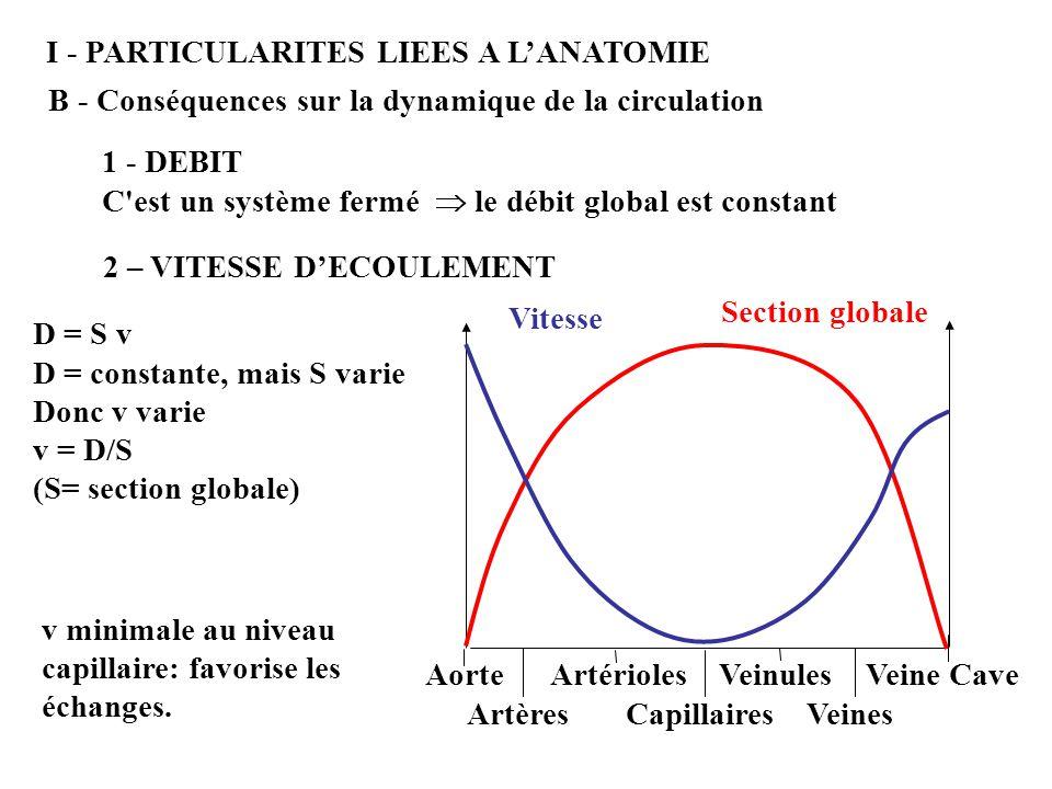 I - PARTICULARITES LIEES A LANATOMIE B - Conséquences sur la dynamique de la circulation 1 - DEBIT C'est un système fermé le débit global est constant