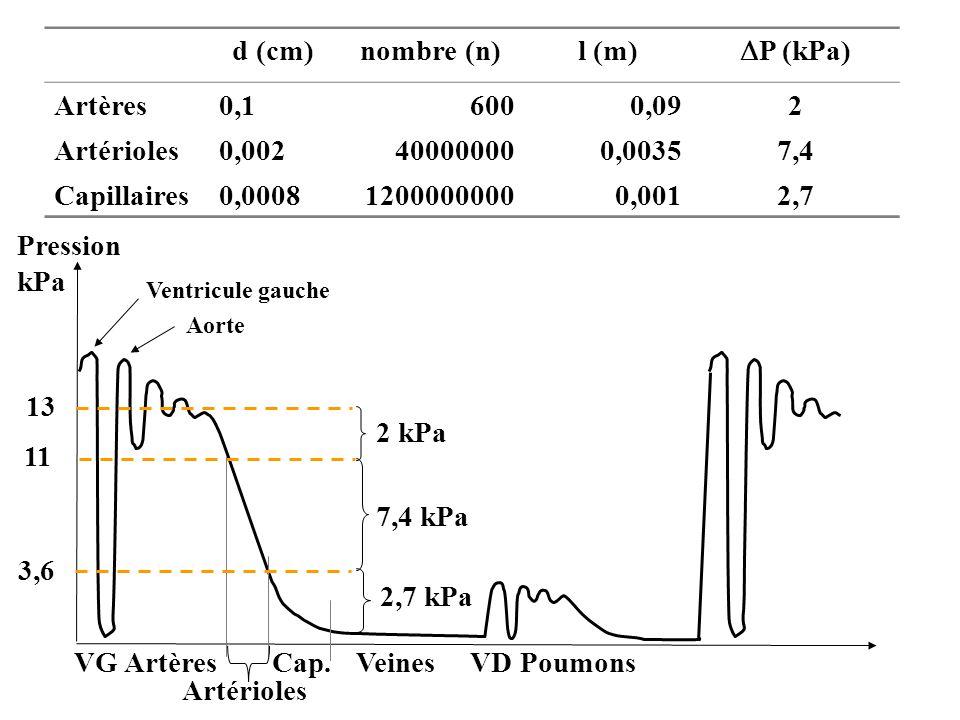 d (cm)nombre (n)l (m) P (kPa) Artères0,16000,092 Artérioles0,002400000000,00357,4 Capillaires0,000812000000000,0012,7 Pression kPa Ventricule gauche A