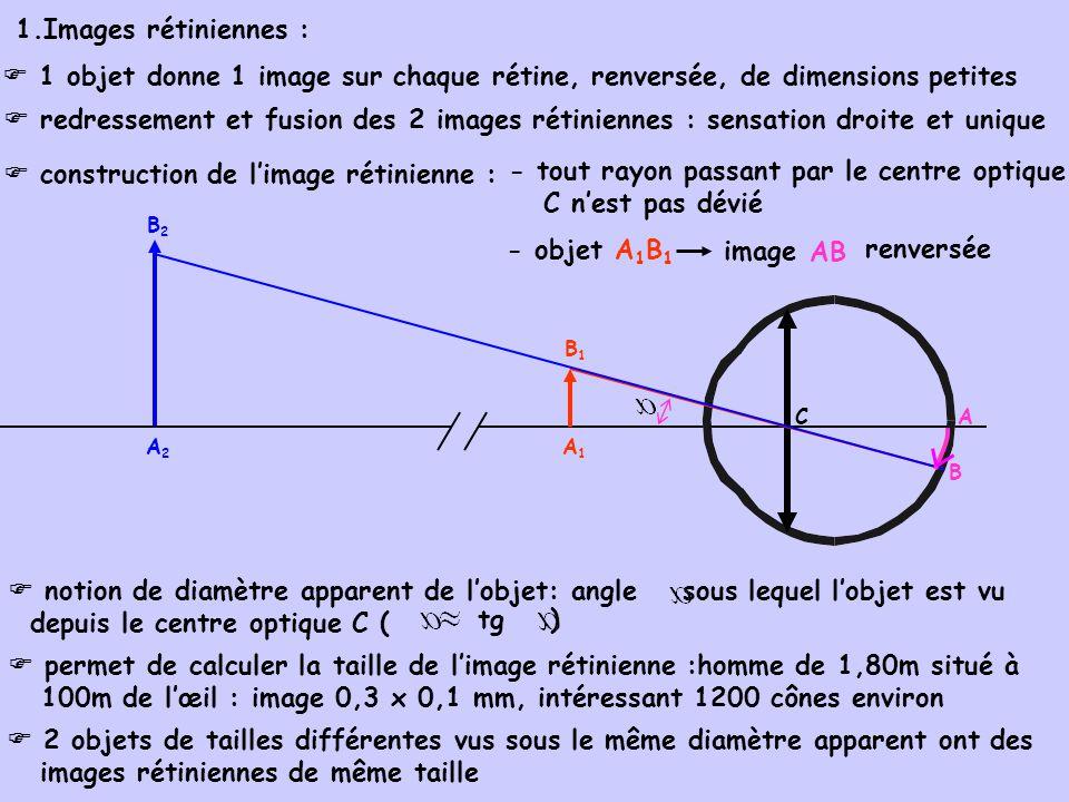 permet de calculer la taille de limage rétinienne :homme de 1,80m situé à 100m de lœil : image 0,3 x 0,1 mm, intéressant 1200 cônes environ 1.Images rétiniennes : 1 objet donne 1 image sur chaque rétine, renversée, de dimensions petites construction de limage rétinienne : redressement et fusion des 2 images rétiniennes : sensation droite et unique C A1A1 B1B1 A2A2 B2B2 - tout rayon passant par le centre optique C nest pas dévié - objet A 1 B 1 image AB renversée notion de diamètre apparent de lobjet: angle sous lequel lobjet est vu depuis le centre optique C ( tg ) 2 objets de tailles différentes vus sous le même diamètre apparent ont des images rétiniennes de même taille A B