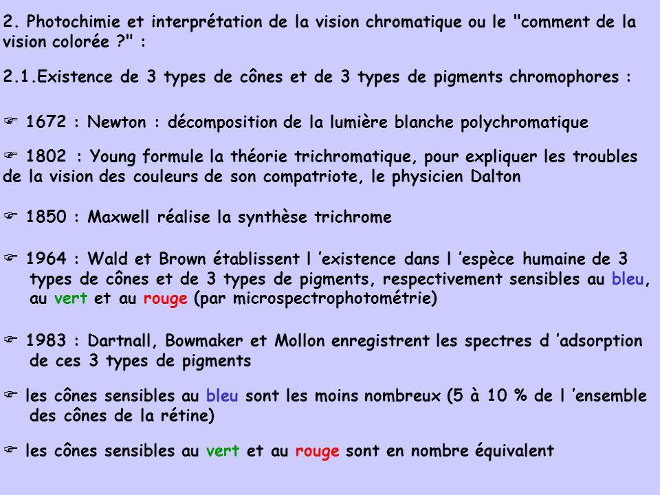 2. Photochimie et interprétation de la vision chromatique ou le