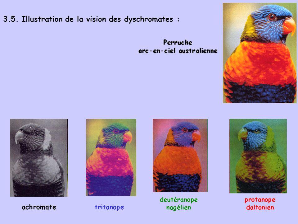 3.5. Illustration de la vision des dyschromates :