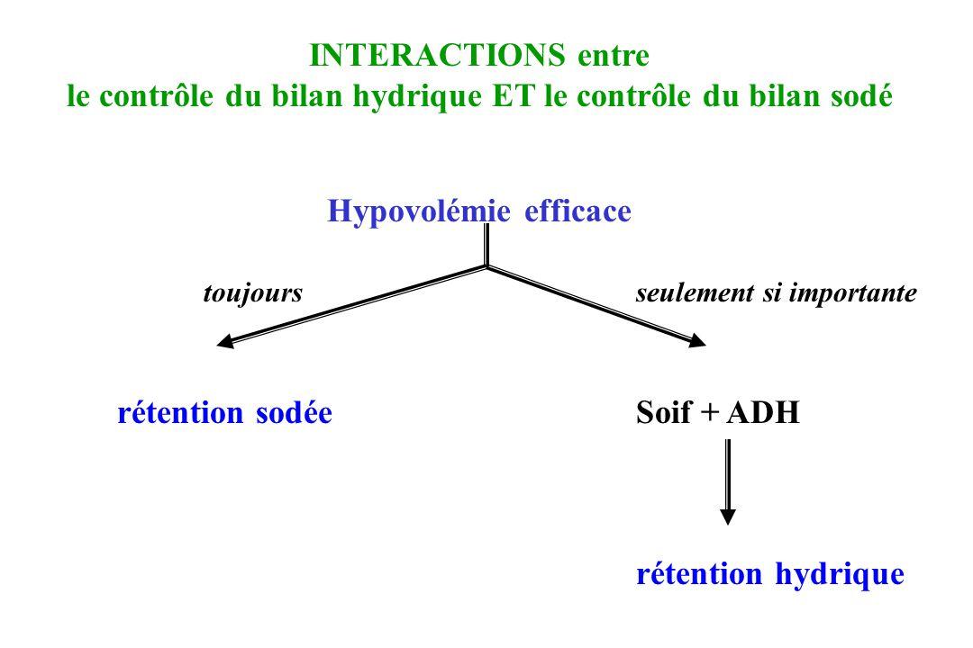 INTERACTIONS entre le contrôle du bilan hydrique ET le contrôle du bilan sodé Hypovolémie efficace toujoursseulement si importante rétention sodée Soi