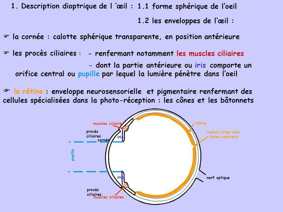 cornée humeur aqueuse pupille vitré cristallin procès ciliaires muscles ciliaires zonule iris rétine macula lutea nerf optique 1.3 le contenu de l œil : le cristallin : lentille biconvexe, transparente, située en arrière de liris la zonule : ligament suspenseur reliant la périphérie du cristallin aux procès ciliaires l humeur aqueuse : solution transparente en Av du cristallin (chambre antérieure) le vitré : gel transparent en Ar du cristallin (chambre postérieure)