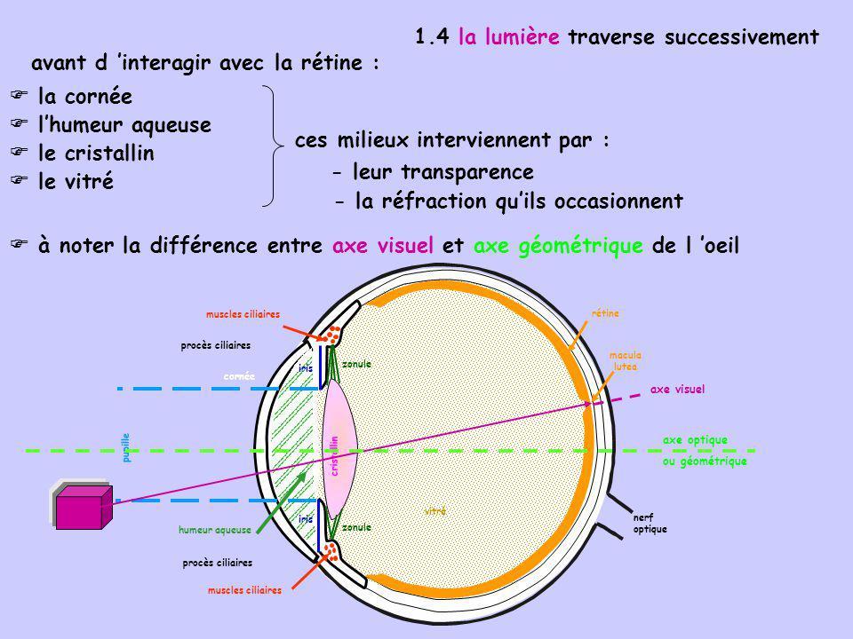 un ensemble de milieux transparents et convergents un diaphragme d ouverture variable : la pupille un système de mise au point en fonction de la distance : le cristallin un récepteur sensible à la lumière : la rétine Oeil = système optique complexe, comprenant :