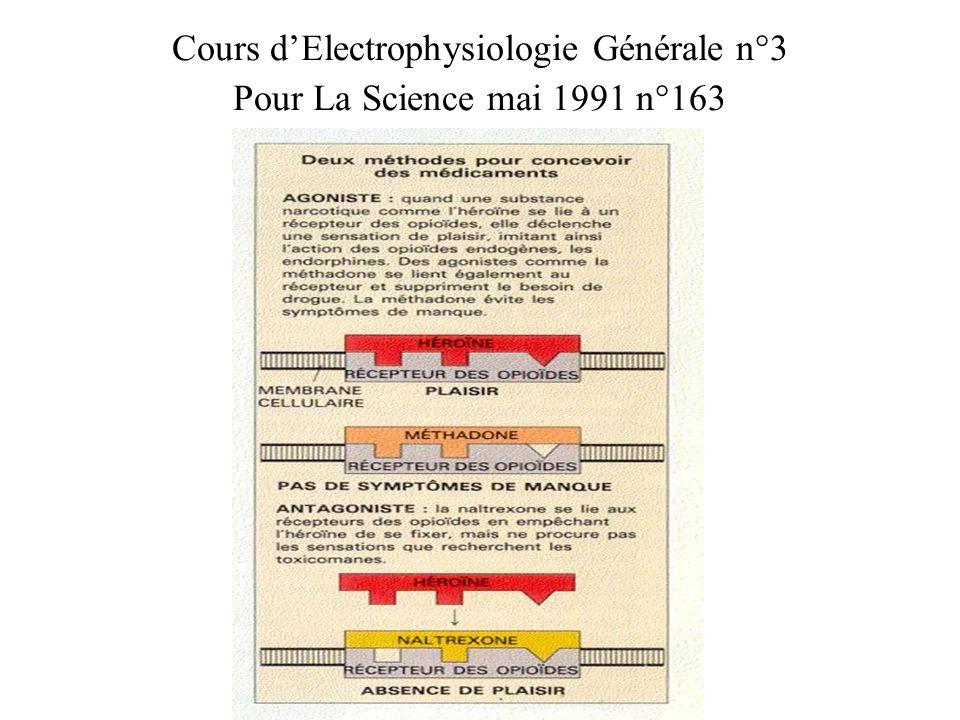 Cours dElectrophysiologie Générale n°3 RECEPTEUR Les récepteurs membranaires ont donc au moins 2 fonctions pour la cellule : -Assurer la reconnaissance du messager extra-cellulaire, -Assurer la 1 ère étape de la transduction.