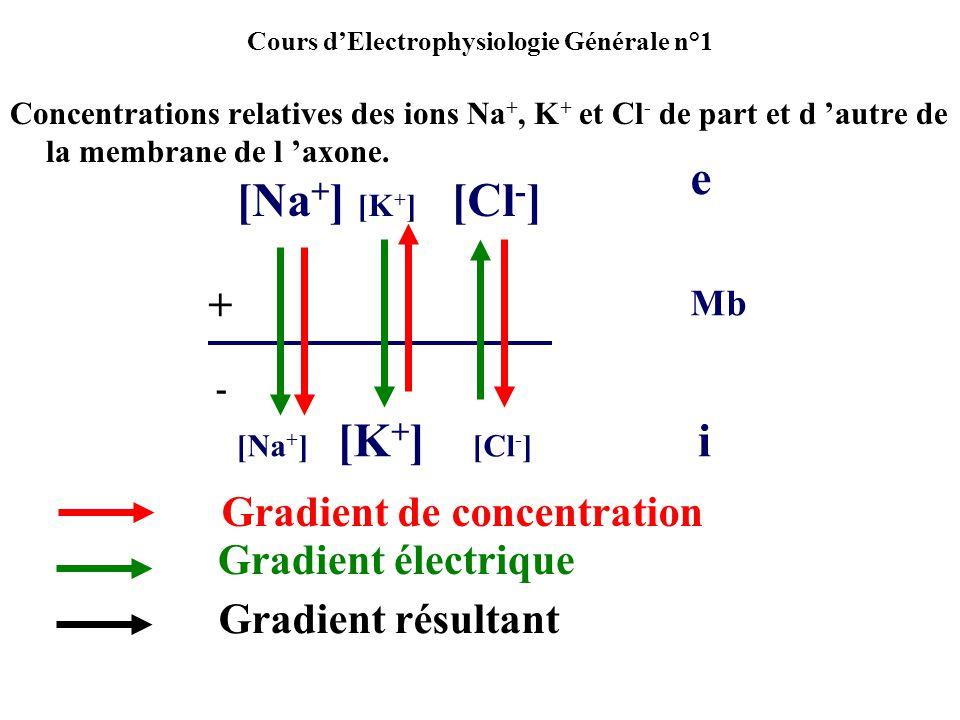 Cours dElectrophysiologie Générale n°1 Concentrations relatives des ions Na +, K + et Cl - de part et d autre de la membrane de l axone. [Na + ] [K +
