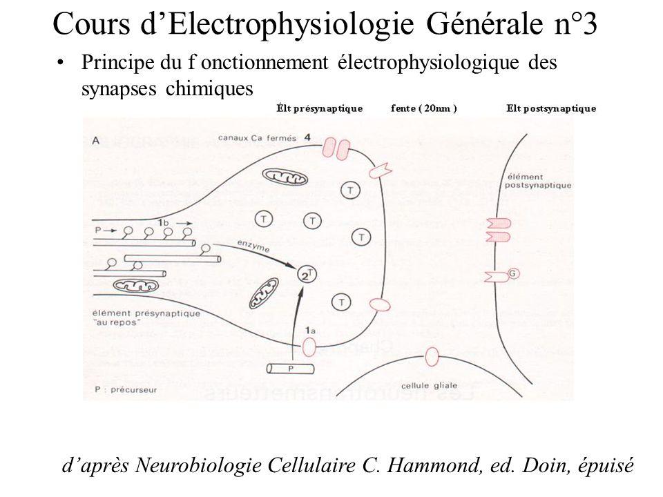 Cours dElectrophysiologie Générale n°3 Principe du f onctionnement électrophysiologique des synapses chimiques daprès Neurobiologie Cellulaire C. Hamm