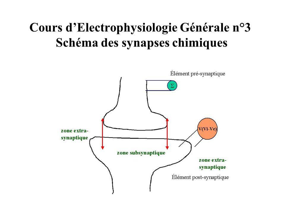 Cours dElectrophysiologie Générale n°3 Schéma des synapses chimiques