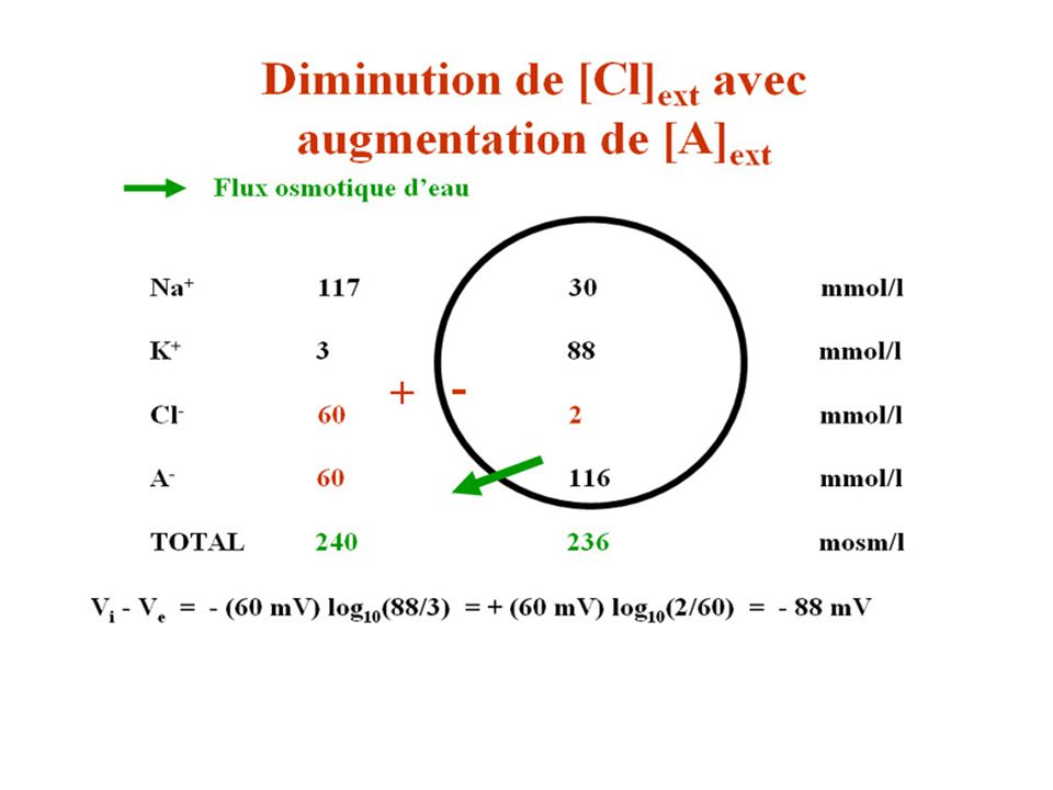 Diminuntion de Cl augmentation de A 2