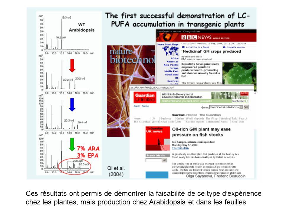 Ces résultats ont permis de démontrer la faisabilité de ce type dexpérience chez les plantes, mais production chez Arabidopsis et dans les feuilles