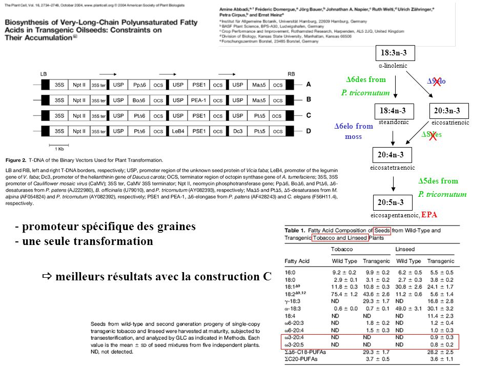 - promoteur spécifique des graines - une seule transformation meilleurs résultats avec la construction C 20:3n-3 18:3n-3 α-linolenic 18:4n-3 stearidonic 20:4n-3 eicosatetraenoic 20:5n-3 eicosapentaenoic, EPA Δ9elo Δ8des Δ6des from P.