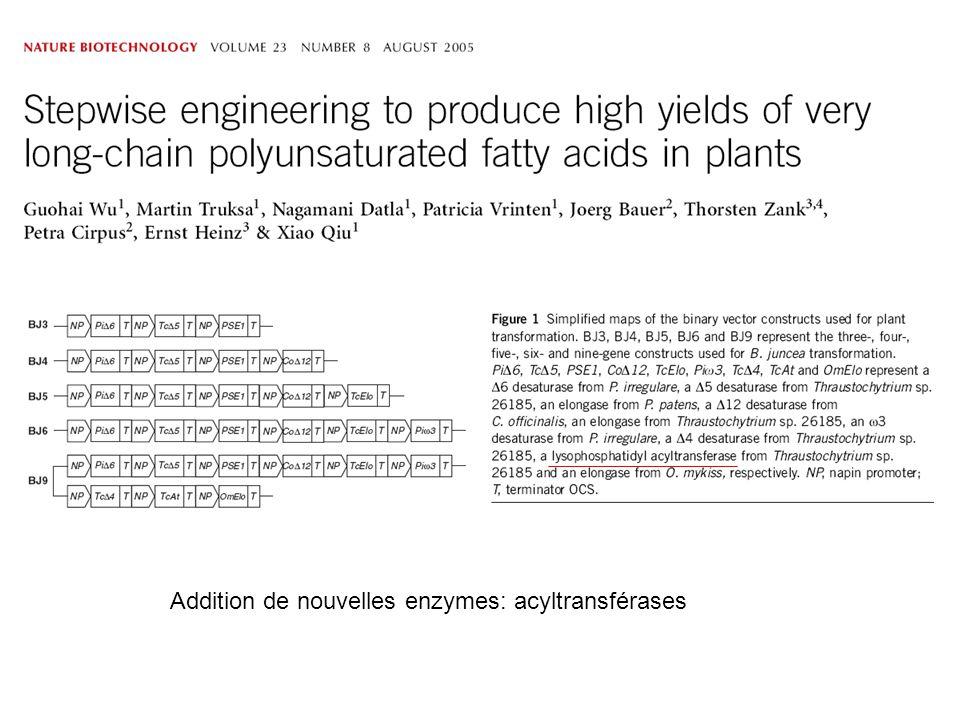 Addition de nouvelles enzymes: acyltransférases
