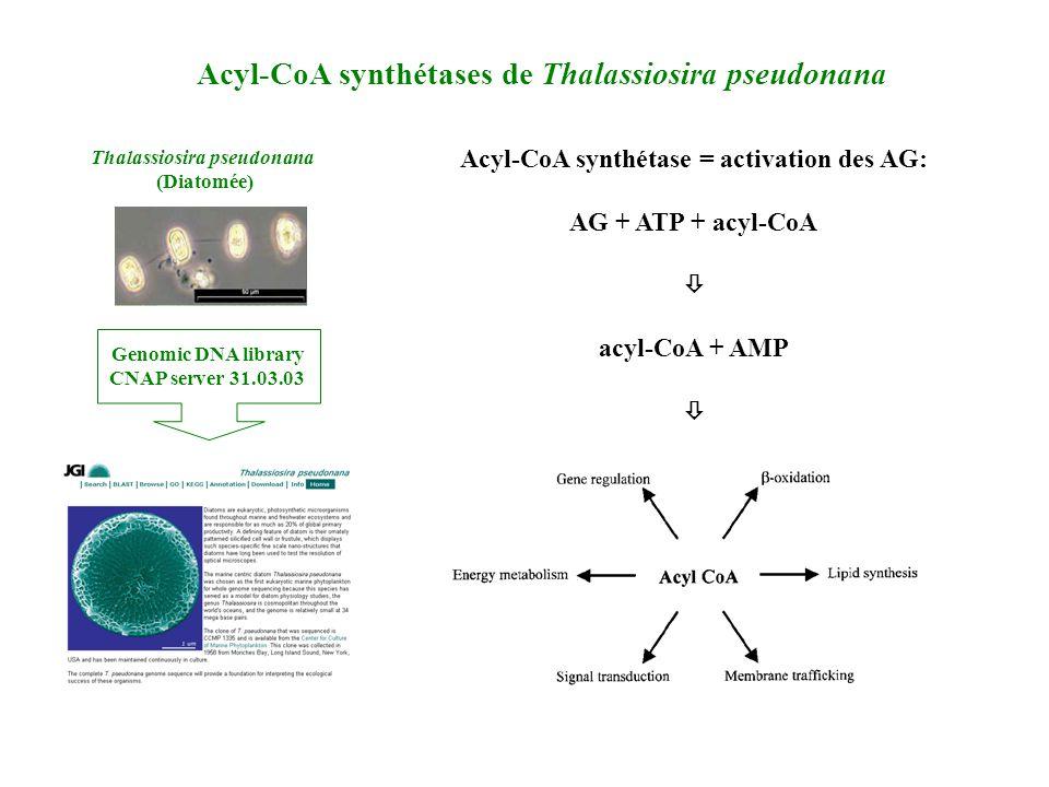 Acyl-CoA synthétases de Thalassiosira pseudonana Thalassiosira pseudonana (Diatomée) Genomic DNA library CNAP server 31.03.03 Acyl-CoA synthétase = activation des AG: AG + ATP + acyl-CoA acyl-CoA + AMP