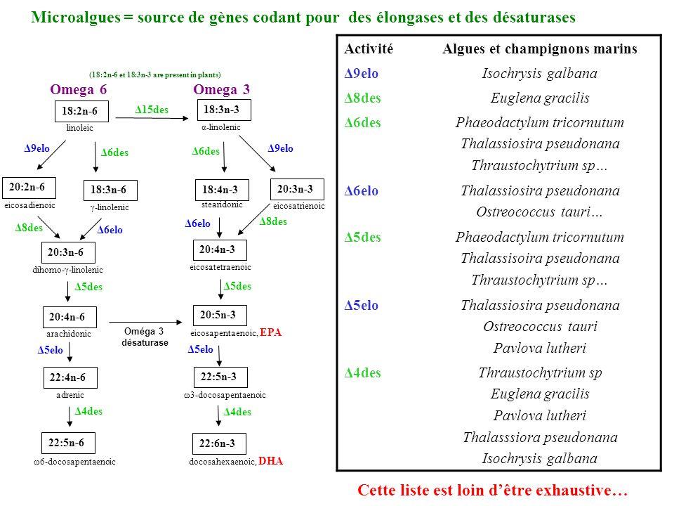 eicosatrienoic Microalgues = source de gènes codant pour des élongases et des désaturases ActivitéAlgues et champignons marins Δ9eloIsochrysis galbana