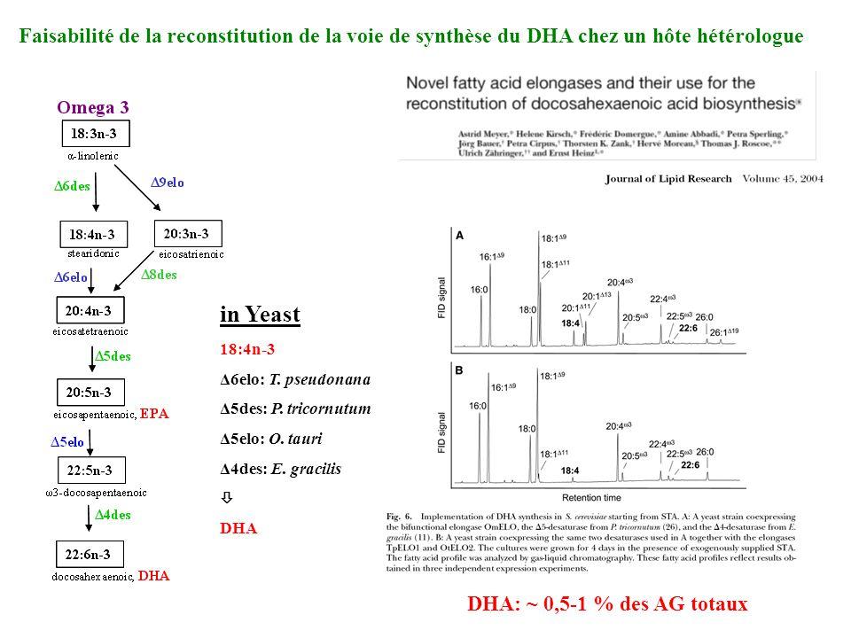 Faisabilité de la reconstitution de la voie de synthèse du DHA chez un hôte hétérologue in Yeast 18:4n-3 Δ6elo: T. pseudonana Δ5des: P. tricornutum Δ5