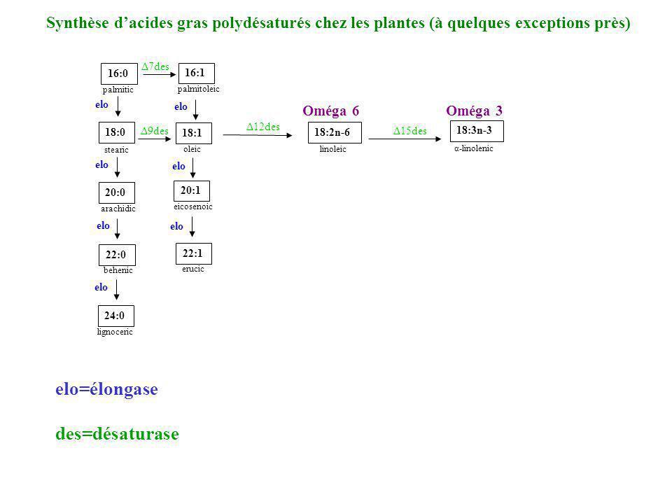 16:0 palmitic 18:0 stearic 16:1 palmitoleic 18:1 oleic 20:1 eicosenoic 22:1 erucic 24:0 lignoceric 22:0 behenic 20:0 arachidic 18:2n-6 linoleic 18:3n-