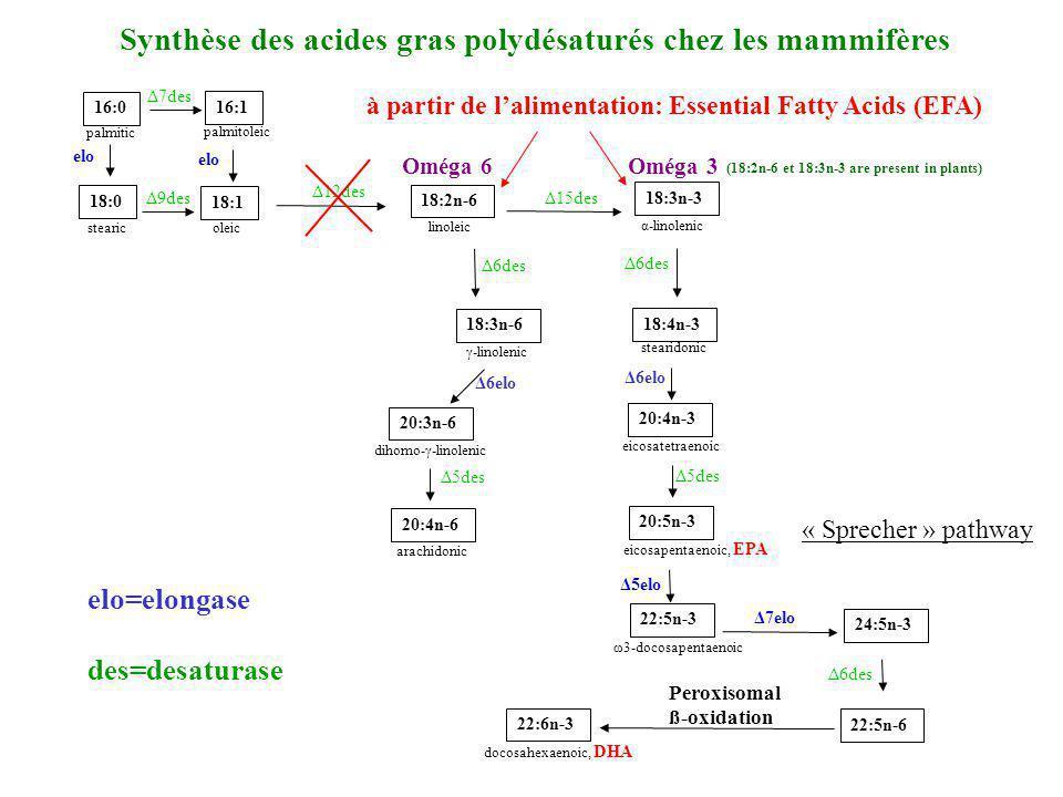 16:0 palmitic 18:0 stearic 20:4n-6 arachidonic 20:3n-6 dihomo-γ-linolenic 18:3n-6 γ-linolenic 16:1 palmitoleic 18:1 oleic 18:2n-6 linoleic 22:6n-3 doc