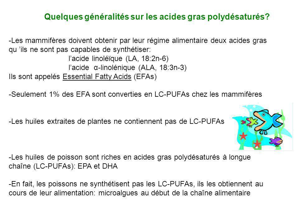 -Les mammifères doivent obtenir par leur régime alimentaire deux acides gras qu ils ne sont pas capables de synthétiser: lacide linoléϊque (LA, 18:2n-