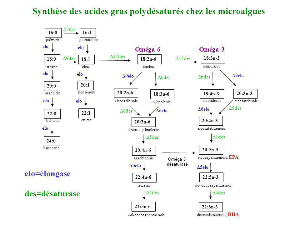 20:3n-3 16:0 palmitic 18:0 stearic 20:4n-6 arachidonic 20:3n-6 dihomo-γ-linolenic 18:3n-6 γ-linolenic 16:1 palmitoleic 18:1 oleic 20:1 eicosenoic 22:1