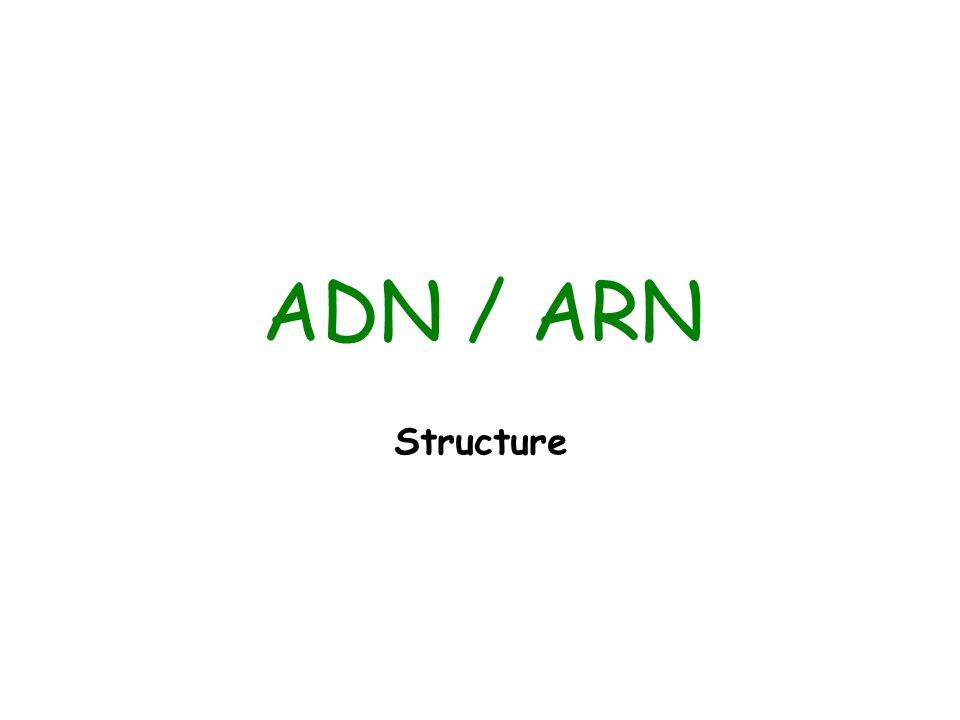 ADN / ARN Structure
