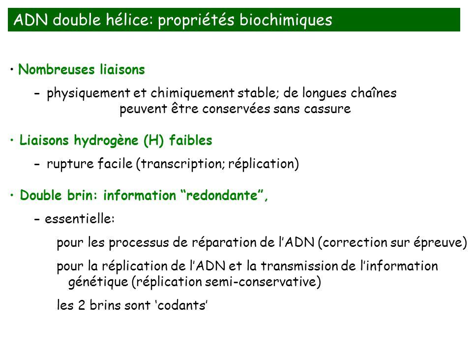Nombreuses liaisons - physiquement et chimiquement stable; de longues chaînes peuvent être conservées sans cassure Liaisons hydrogène (H) faibles - ru