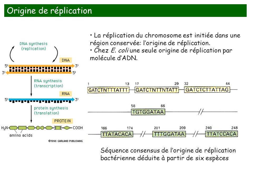 Séquence consensus de lorigine de réplication bactérienne déduite à partir de six espèces La réplication du chromosome est initiée dans une région con