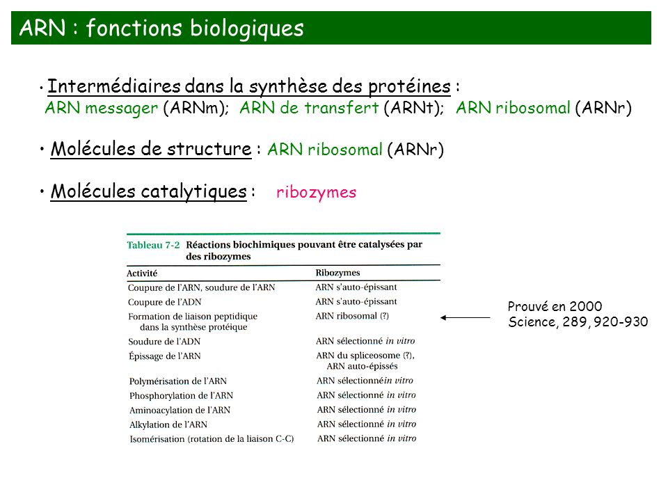 Intermédiaires dans la synthèse des protéines : ARN messager (ARNm); ARN de transfert (ARNt); ARN ribosomal (ARNr) Molécules de structure : ARN riboso