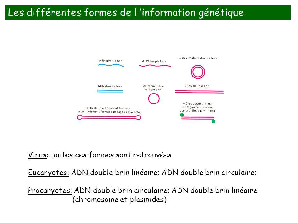 Virus: toutes ces formes sont retrouvées Eucaryotes: ADN double brin linéaire; ADN double brin circulaire; Procaryotes: ADN double brin circulaire; AD