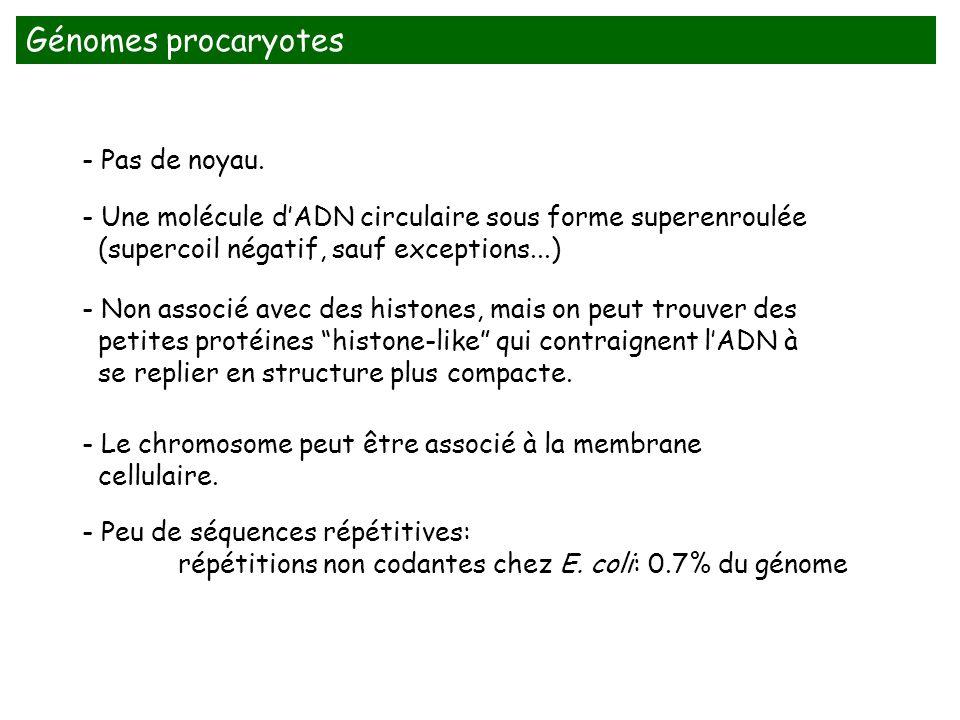 - Peu de séquences répétitives: répétitions non codantes chez E. coli: 0.7% du génome - Non associé avec des histones, mais on peut trouver des petite