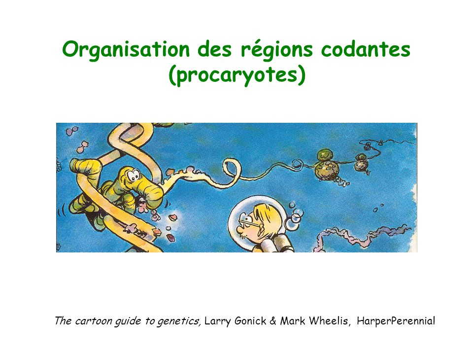 The cartoon guide to genetics, Larry Gonick & Mark Wheelis, HarperPerennial Organisation des régions codantes (procaryotes)