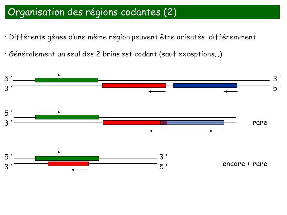 Organisation des régions codantes (2) Différents gènes dune même région peuvent être orientés différemment Généralement un seul des 2 brins est codant