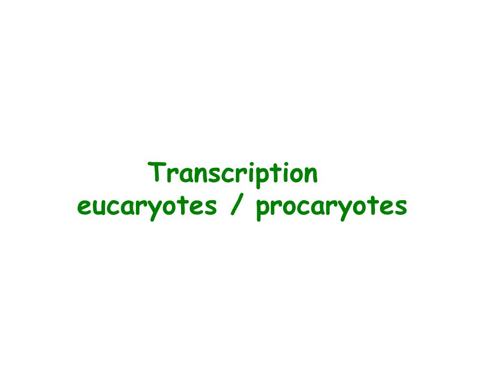 Transcription eucaryotes / procaryotes