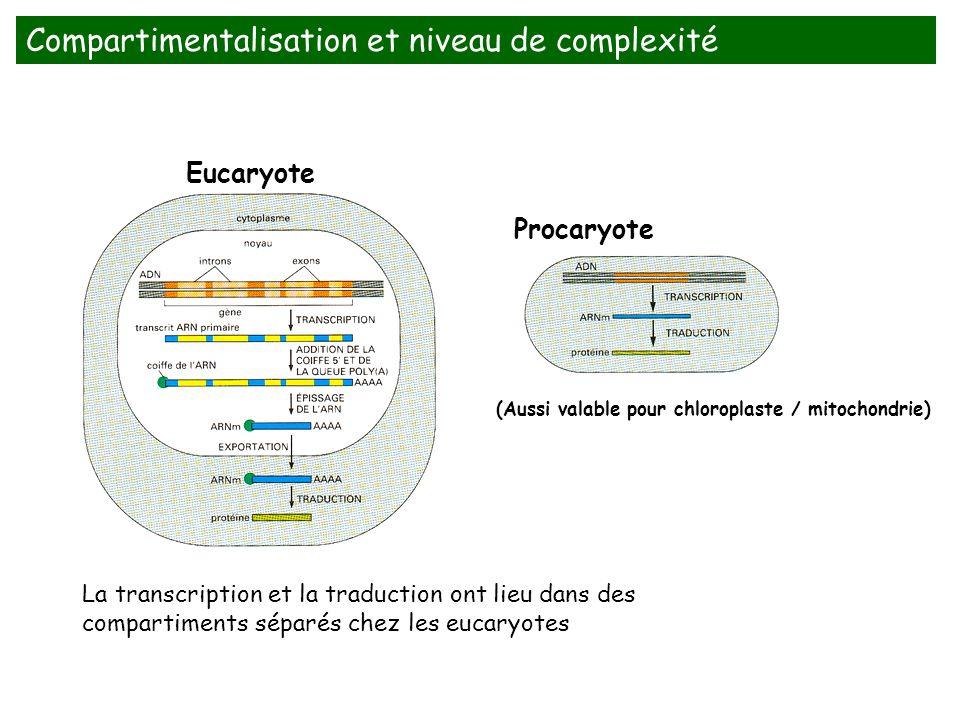 (Aussi valable pour chloroplaste / mitochondrie) Eucaryote La transcription et la traduction ont lieu dans des compartiments séparés chez les eucaryot